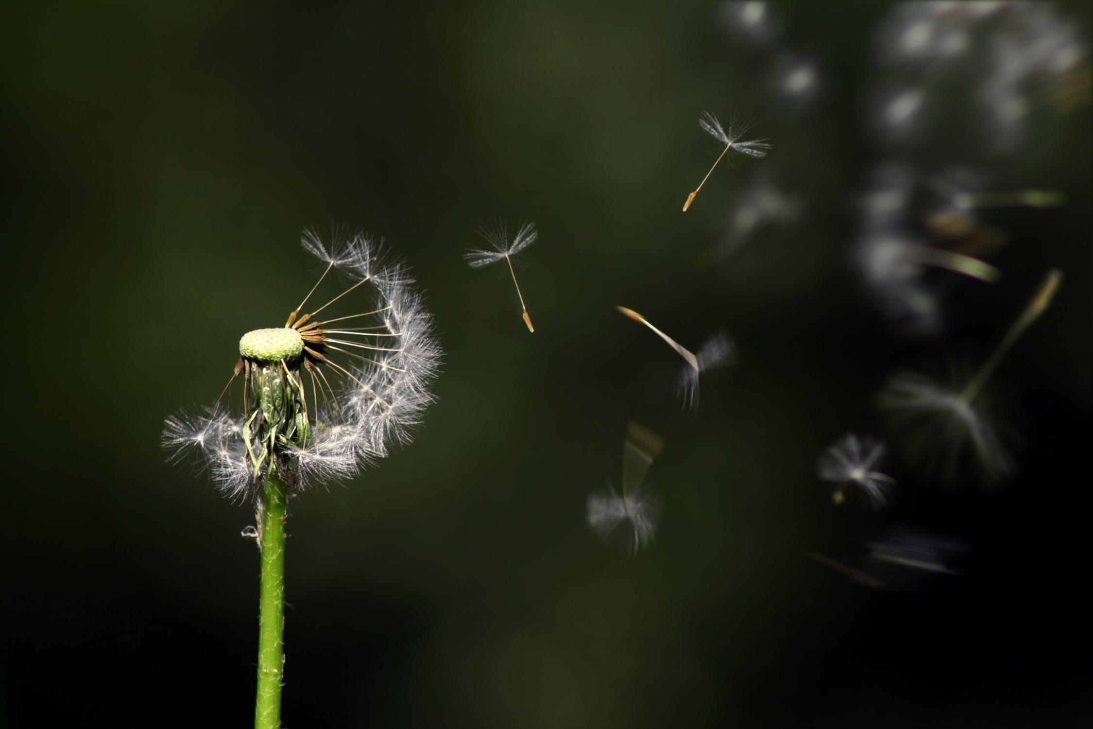 Streisand Effekt – Definition und vermeiden
